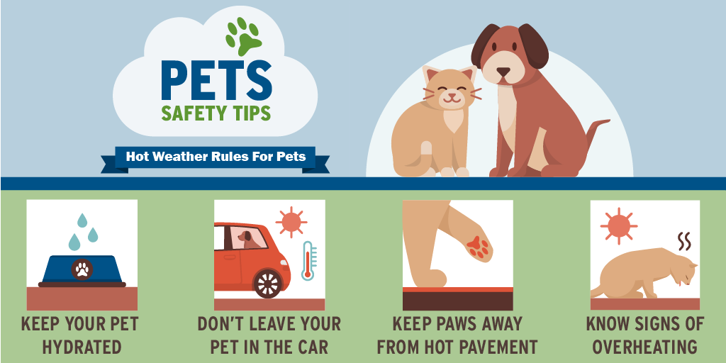 InfoGraphic-Pets hot weather